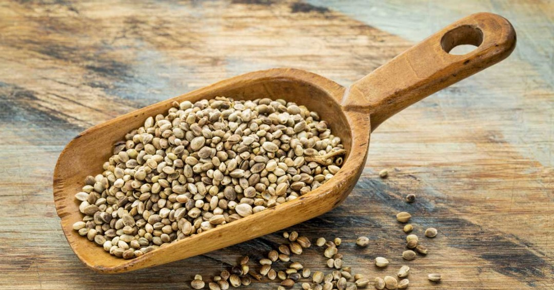 Hemp-Seeds-A-Nutrient-Dense-Super-Food-1080x565