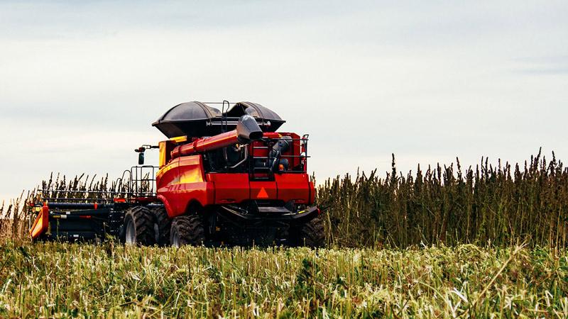 rolnictwo-i-przetworstwo-konopne