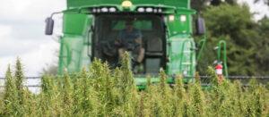 uprawa konopi przemysłowych agrotechnika